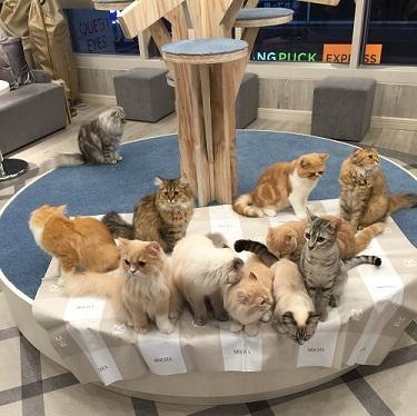 猫カフェ恋活パーティーに行ってみた!