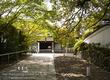 青蓮院の桜 No.2 9