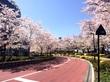 お花見は上野より〜ミッドタウンが好き〜♪