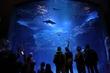 月光に漂う水族館1