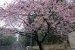 上野動物園春のイベント『HANAMI AT UENOZOO』が3/25(土)より開催。 上野公園 美術館・博物館 混雑情報他