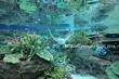 名古屋港水族館2