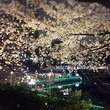 2016 桜・東京 お気に入りの外堀、カナルカフェ(飯田橋)