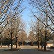 今朝、光が丘公園のウォーキングとか走っている人が少なく感じたのは、東京マラソンがあるからかな。そして、ここ光が丘公園も1ヶ月後にハーフマラソン大会があるそうな。その日にウォーキングすると、邪魔かな。