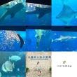 沖縄の海風を感じて『美ら海水族館』へドライブ♪