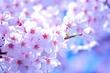 4月のお花見スポット。4月5日満開予報の「山田富士公園」桜の開花状況をレポート
