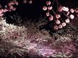 夜桜通り抜け 神戸市立王子動物園 その12