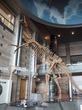 【子連れおでかけ】神奈川県立生命の星・地球博物館へ☆