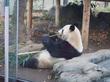 東京都恩賜上野動物園/年賀状用の写真を撮りに行ってきました(酉だけに?)