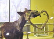 動物園でバレンタインを楽しもう!イベント内容と見所は?(よこはま動物園ズーラシア・野毛山動物園・金沢動物園)