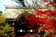 大覚寺門跡・夜間特別拝観「真紅の水鏡」