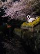 夜桜通り抜け 神戸市立王子動物園 その3