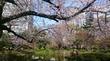 2017 桜 日比谷公園