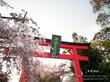 平野神社 9 No.2