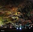 beautifu Japan