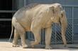 最近話題になってる「池田動物園の公営化要望」について思うこと。