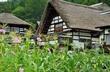将来はこんな村里の原風景を感じる古民家に住みたいな~前沢集落~