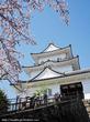 *小田原城の桜*