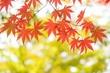 秋の遊歩道&多摩よこやまの道をめぐるガイドウォーキング 参加者募集