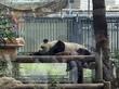 上野動物園と洋食屋さくらい