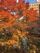中島公園の紅葉、2017その2。