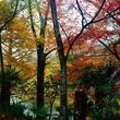 ☆SNSで大人気!!の瑠璃光院の紅葉と、やっぱり最高!!清水寺の美しすぎるライトアップ!!☆
