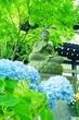 神奈川・鎌倉♪『長谷寺』色とりどりのあじさいとやっと行けた鎌倉大仏~☆