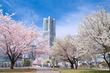 横浜の今年の桜はいつ咲く?神奈川県のさくらの開花予想日と満開予想日