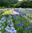 加茂花菖蒲園