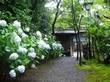 別庭 桜茶屋