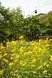 神戸市立布引ハーブ園