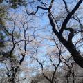 多摩川台公園