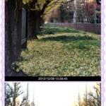 明治神宮外苑