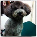 pet salon RANKIN DOG