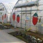 小杉豊農園