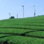 お茶の川端園
