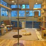 猫カフェ にゃんころ