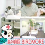 鳥の病院 BIRDMORE