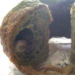 Heart Bread ANTIQUE 近鉄パッセ店外には抹茶パウダーがかかってて、中には小豆が入ってます。