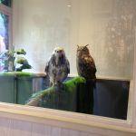 ついに来た。^_^鳥のいるカフェ