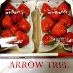 ARROW TREE Whity梅田店