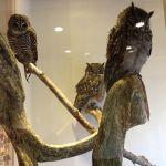 左から、アカシアモリフクロウ、アフリカワシミミズク、アビシニアワシミミズク。 @ 鳥のいるカフェ