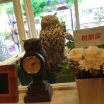このお店最大の鳥、ユーラシアワシミミズクの背中。体重2kg。 @ 鳥のいるカフェ