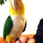 鳥のいるカフェでまりもちゃんと触れ合う事もできました。メガネ好きな子∧( 'Θ' )∧