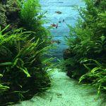 すみだ水族館エントランスの水草水槽癒される。
