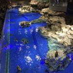 すみだ水族館のペンギンたち