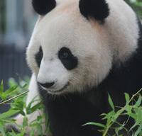 関東の動物園