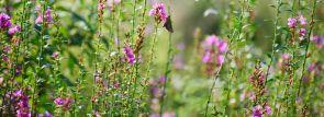 伊豆おすすめのオープンガーデン~四季折々の花々に囲まれて~