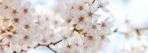 関西お花見2018~桜の名所・見ごろ・穴場・ライトアップ情報~
