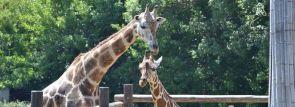 関西の動物園